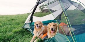 camping avec chien
