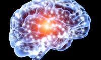 Les cerveaux masculin et féminin sont différents.