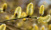 L'importance de soigner ses allergies au pollen naturellement en 2019