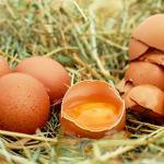 Manger trop d'œufs peut causer des problèmes cardiovasculaires