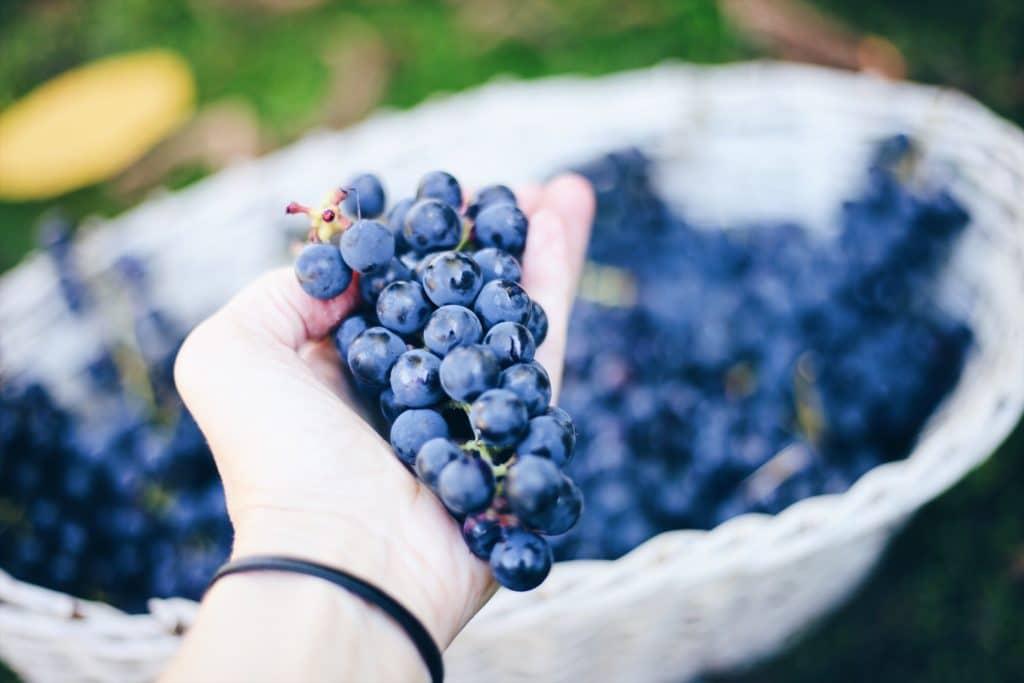Quels sont les autres bienfaits du raisin ?