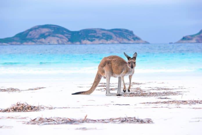 Comment organiser un voyage en Australie ?