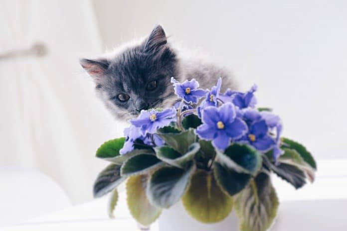 Quelle plante choisir pour son intérieur ?