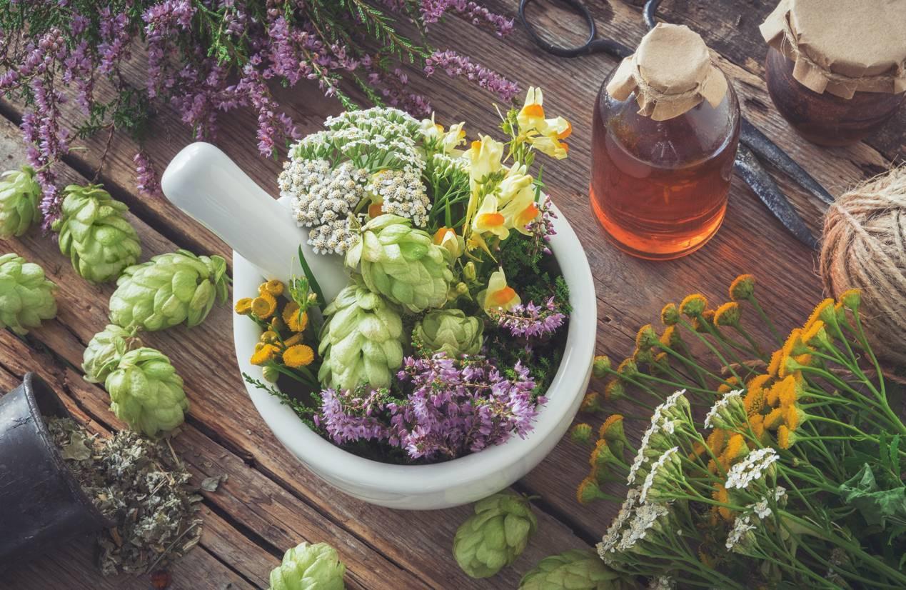 préparation à base de plantes