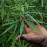 Cannabis récréatif: une élue du Loiret appelle Gérald Darmanin à sortir du débat idéologique