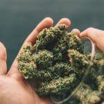 Les fleurs de CBD : comment les consommer ?