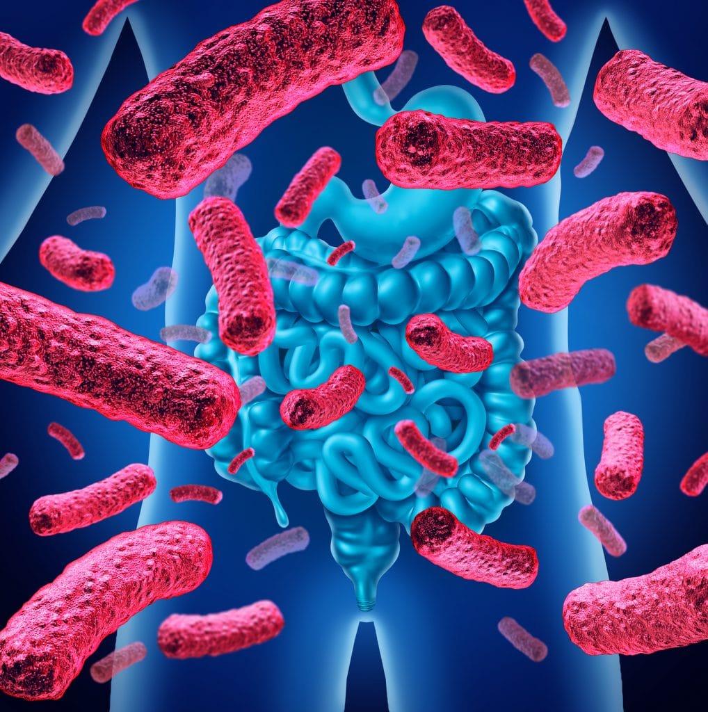 probiotiques flore intestinale